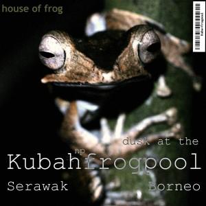dusk-Kubah-frogpool